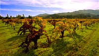 The Vineyards of Napa Valley